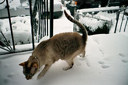 snow-patrick1