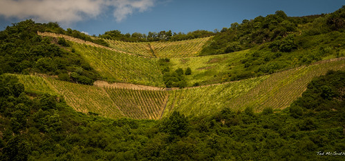 stairs germany vineyard vines nikon steps terraces unescoworldheritagesite unesco grapes cropped hillside vignetting 2015 d600 tedmcgrath tedsphotos nikonfx d600fx