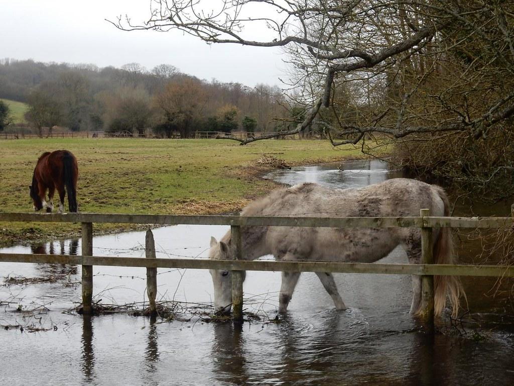 Horse in the Chess Chorleywood to Chesham