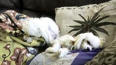 Guarding the sofa pillows