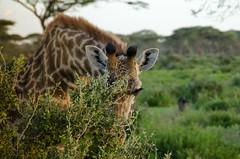 Tanzania-Masek-SafariDrive-43