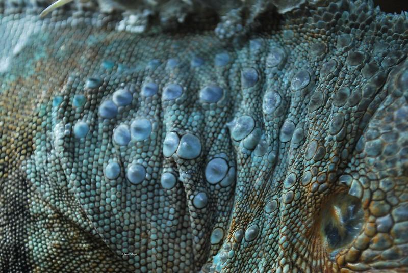 Protobothrops mangshanensis : Vivarium de Lausanne Suisse 9063797536_6b92ee0821_c