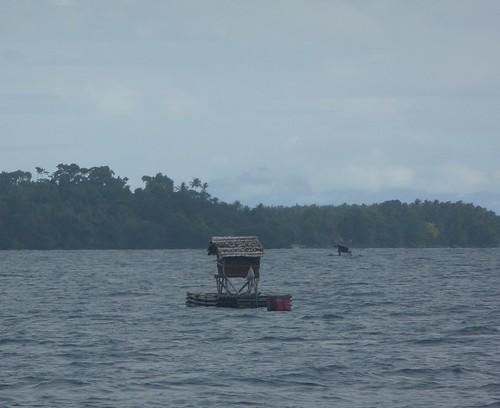 Moluques13-Ambon-Seram-bateau (35)