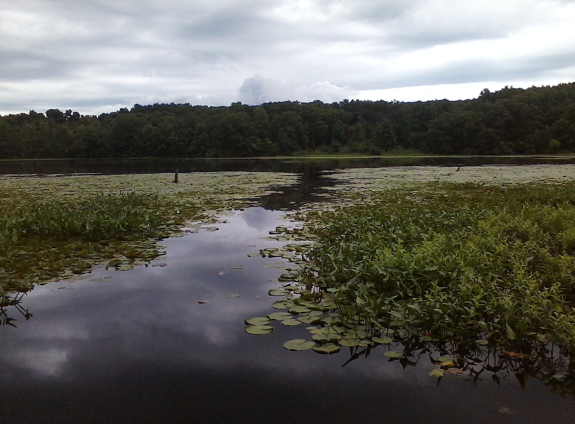 Green Lake Swamp