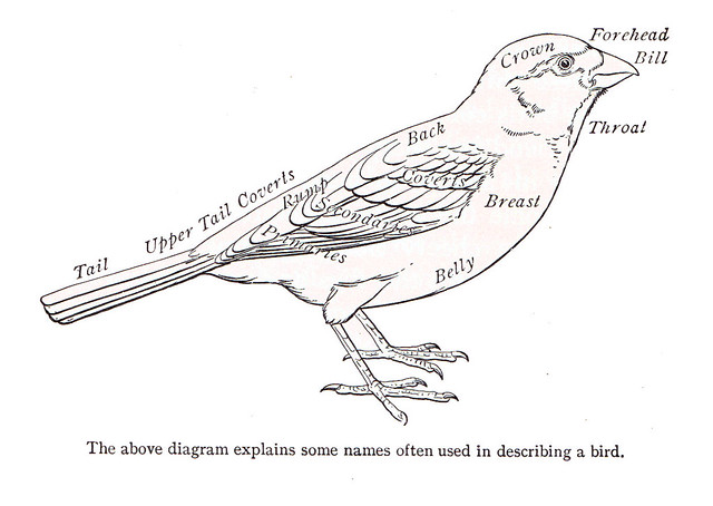 bird diagram