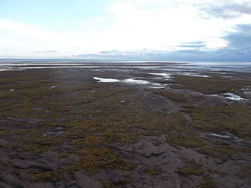 Low tide at Camp Buchan, Belfast, Prince Edward Island (8)