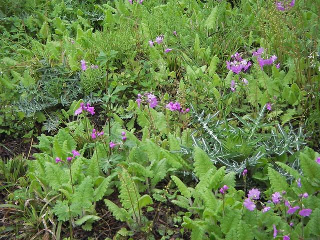 自生地にはいろいろな種類の花が見られる.