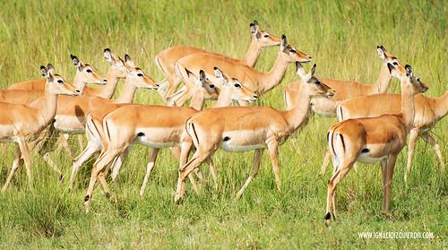 Kenia - Masai Mara 15
