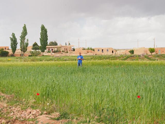 我們的司機穆沙在小麥田中做什麼?