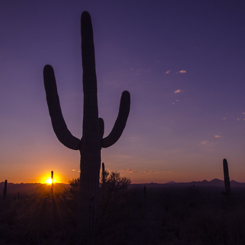 sunset arizona cactus usa southwest nature landscapes purple desert silhouettes saguaronationalpark