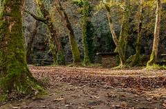 Verdes - Carballo