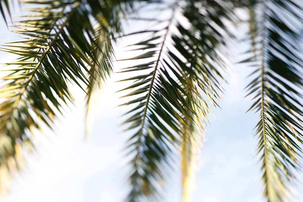 Palm Detail (7451)