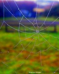 web drop crop