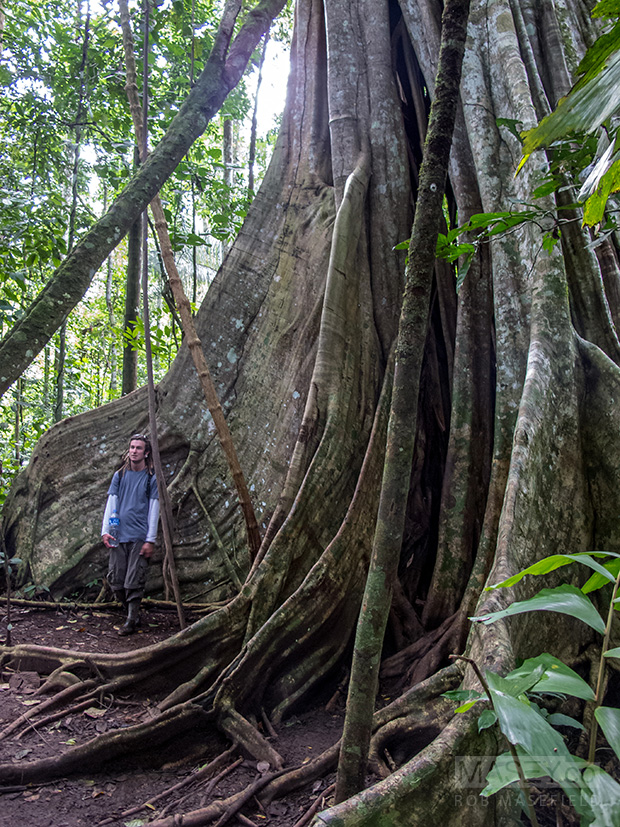 Simon gets dwarfed by one of the Amazon's giants.