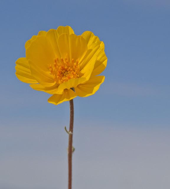 Flowerredo_0865