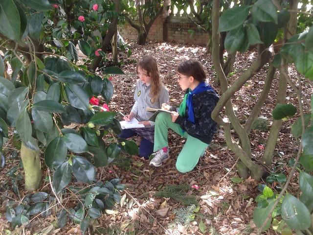 Timberwolf Tree and Plant IDing
