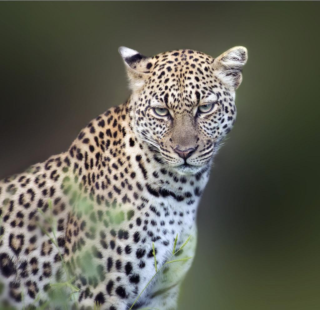 Female. Samburu. Kenya