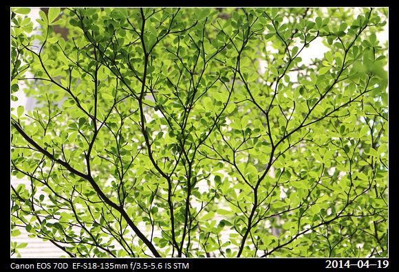 20140419_Green