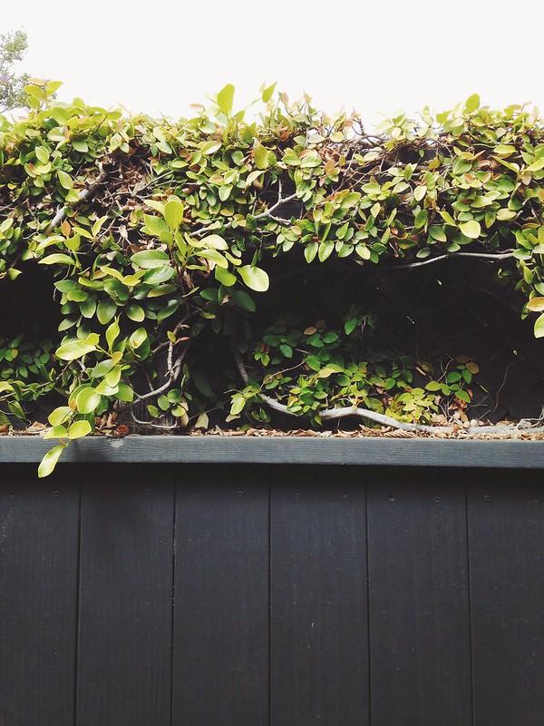 venice foliage