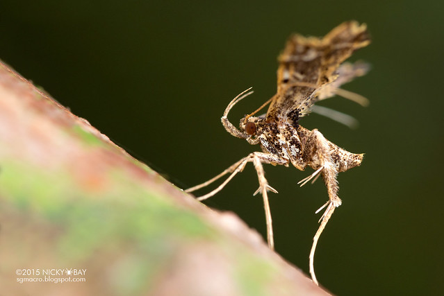 Moth - DSC_4218