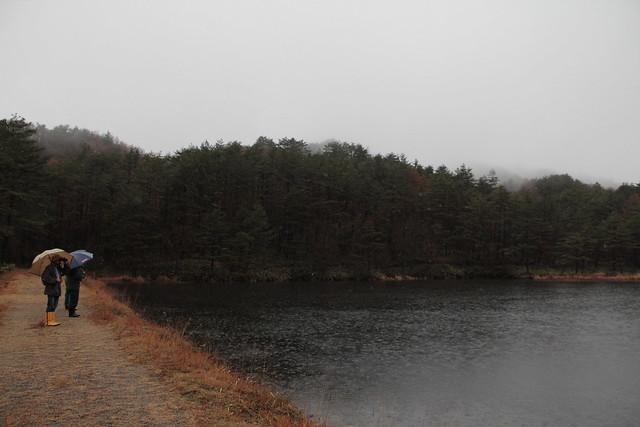 昨年はコガモを観察した新川ため池.水鳥がいるかな??
