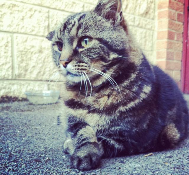 5 lifestyle blog uk vivatramp cat pet tag