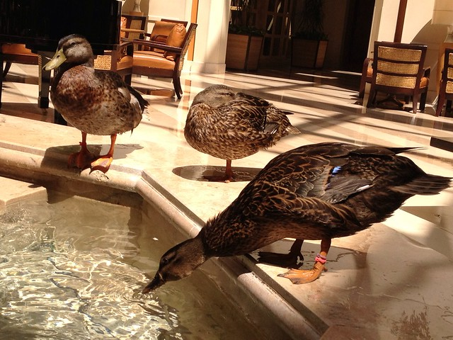 Orlando at Peabody Hotel