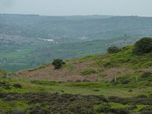 A stroll on Stanton Moor ...