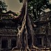 Spong Tree at Ta Prohm