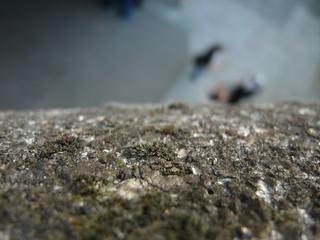 Gray Fuzzy Moss