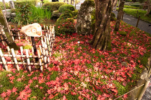 【写真】2012 紅葉 : 寂光院/2020-08-29/IMGP6314