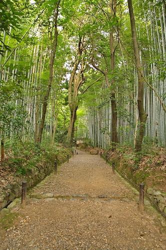 【写真】2013 青葉 : 地蔵院/2021-07-28/IMGP0970