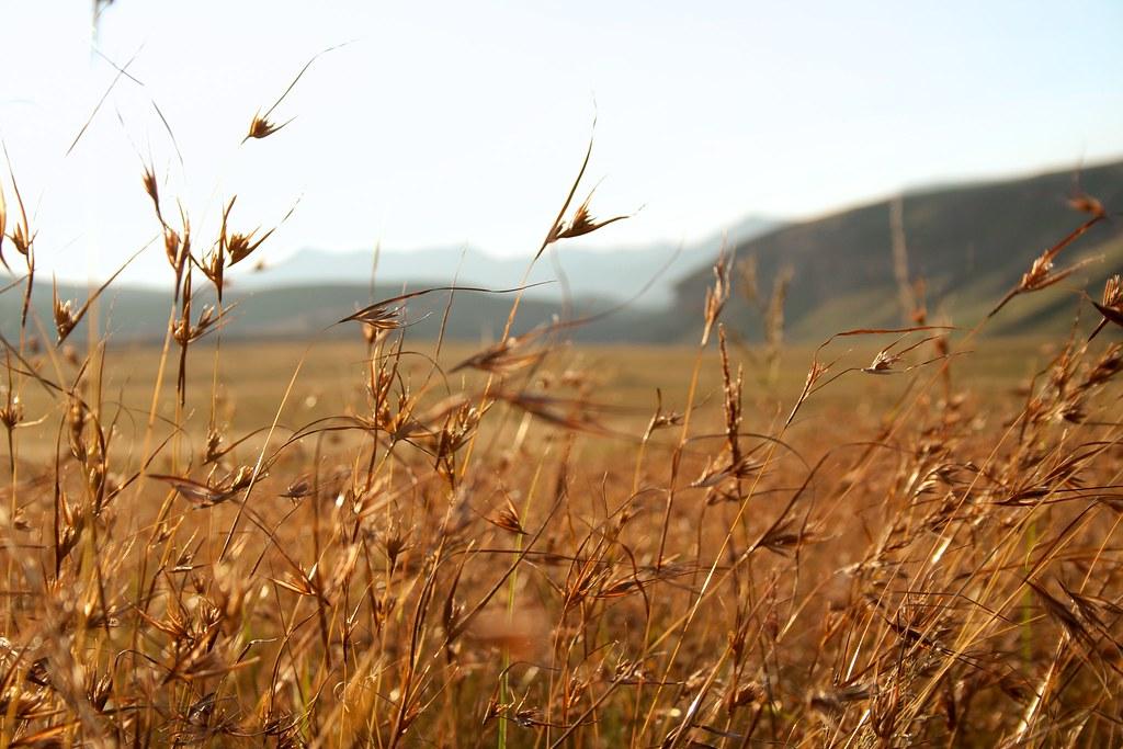 Thabo mofutsanyana provincia del estado libre sud frica for Provincia sudafricana con durban
