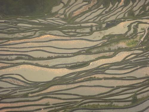 Yunnan13-Yuanyang 24-Bada (46)