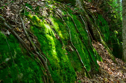 Moss covered rocks - Pine Mountain State Resort Park - Pineville -Kentucky