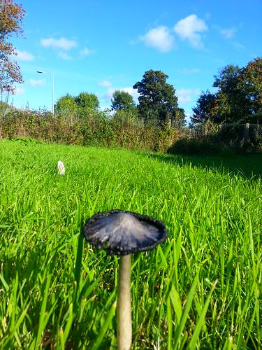 mushroom sunshine bluesky clear flickrandroidapp:filter=none
