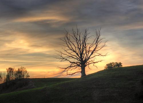 sky tree germany bayern bavaria evening abend oberbayern upperbavaria himmel deadtree baum hdr abends dietramszell toterbaum claudemunich harmating