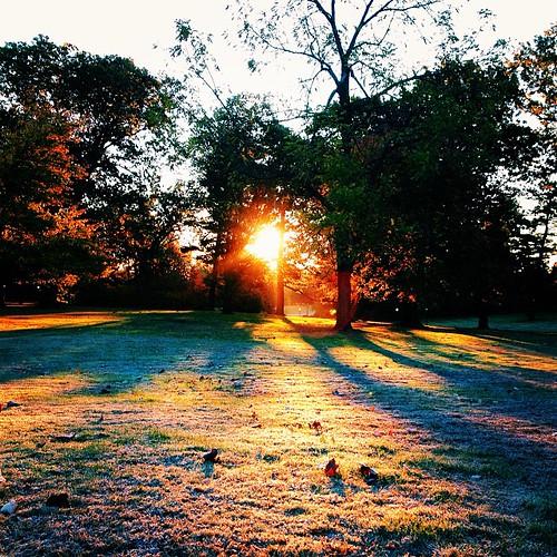 sun tree sunrise square dawn frost lofi squareformat sunbeam vsco iphoneography farleighdickinson instagramapp uploaded:by=instagram vscocam foursquare:venue=4bd39c6b462cb71320f0de07
