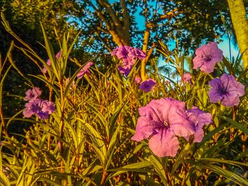 morning flowers autumn trees usa plant flower sunrise google florida doral lightroom mako lgelectronics nexus4 flickrandroidapp:filter=none