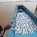 Fish - Puri, India by Maciej Dakowicz