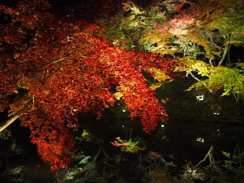 高台寺 臥龍池 紅葉