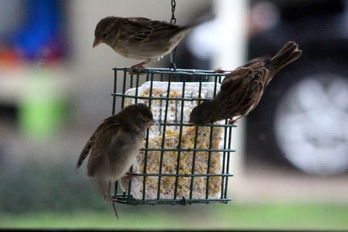 birdssuet2-6