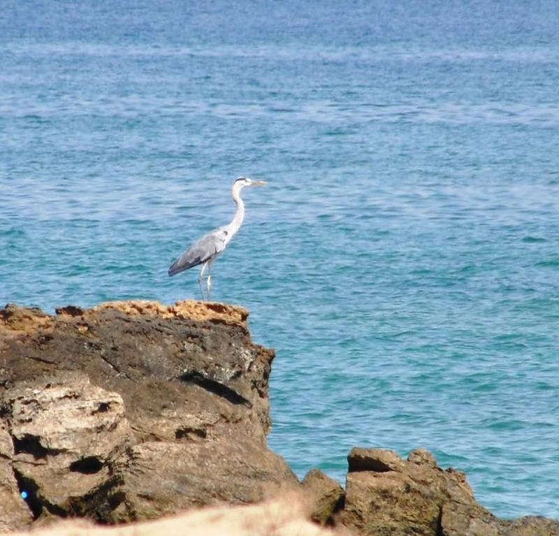 116 En la Isla de Hengam (132)