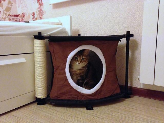 """Сказка и Kitty City""""s Sleepy Corner"""