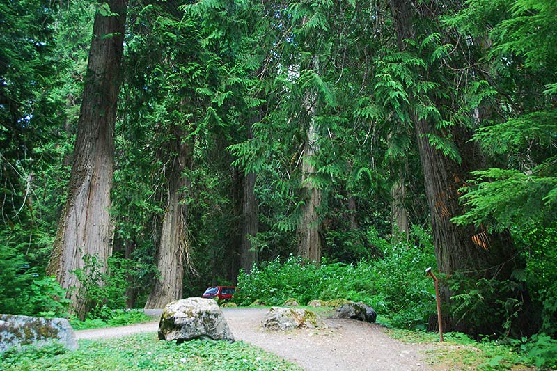 Sumallo Grove, Manning Provincial Park, Cascade Mountains, Hope, British Columbia, Canada