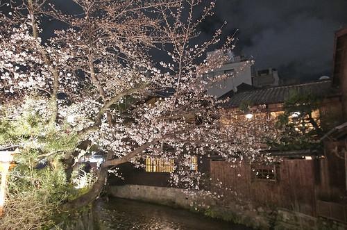 【写真】2014 桜 : 祇園白川/2020-09-13/IMGP5588