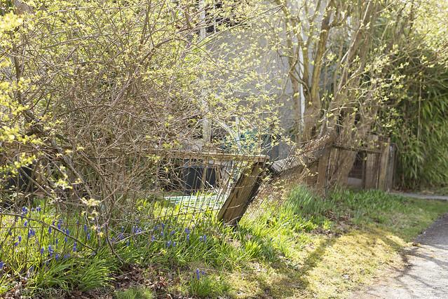 Tumbledown Fence