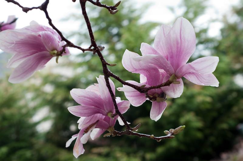 sooc spring blooms