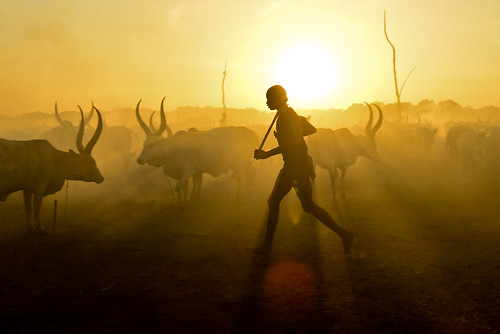 africa travel island war cattle cows southsudan tribe wtn crises juba rivernile cattlecamp mundari terekeka tommcshanephotography levwood levisonwood walkthenile