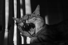 oscar_yawn_0910